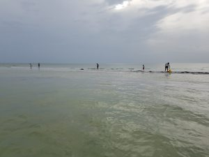 Clearwater Beach Boat and Island Tours