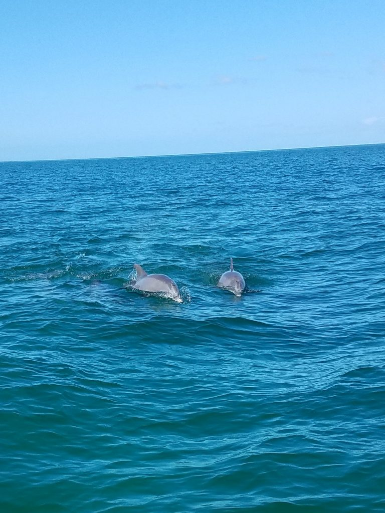 Dolphin tours and charters clearwater beach