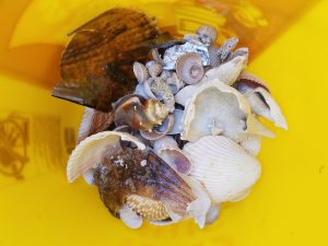 Shelling Tours Clearwater beach