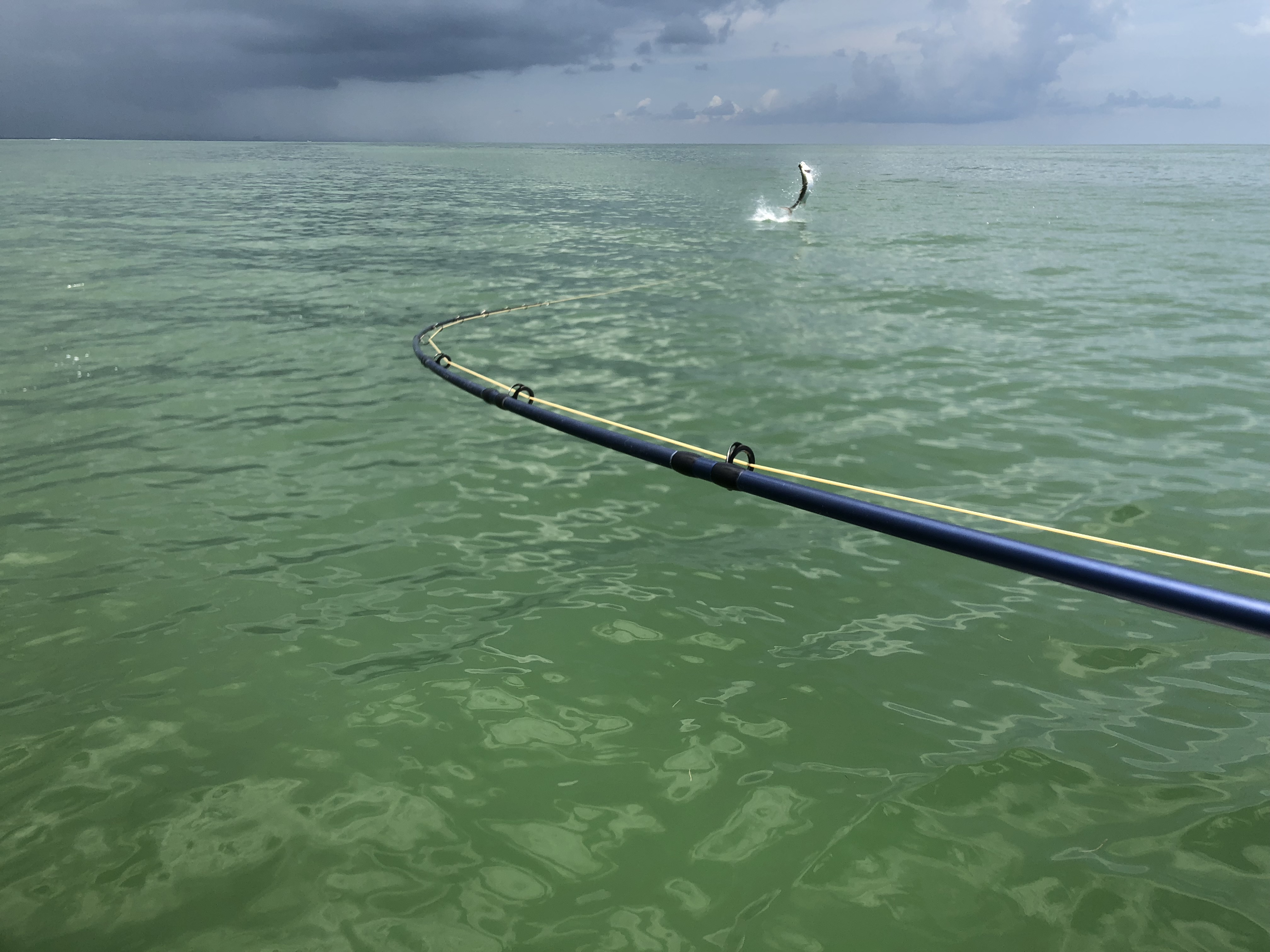 Fly Fishing Tarpon Clearwater beach Capt. Ethan